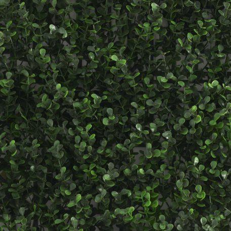 kunsthaag-buxus-sempervirens-top