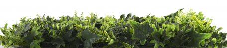 kunsthaag-vegetatie-grof-blad-zijaanzicht