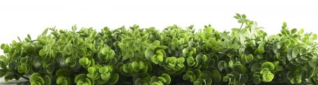 Buxus Grof Vegetatie Zijaanzicht