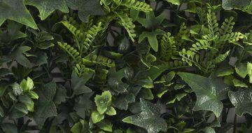 kunsthaag_vegetatie_grof_blad_top